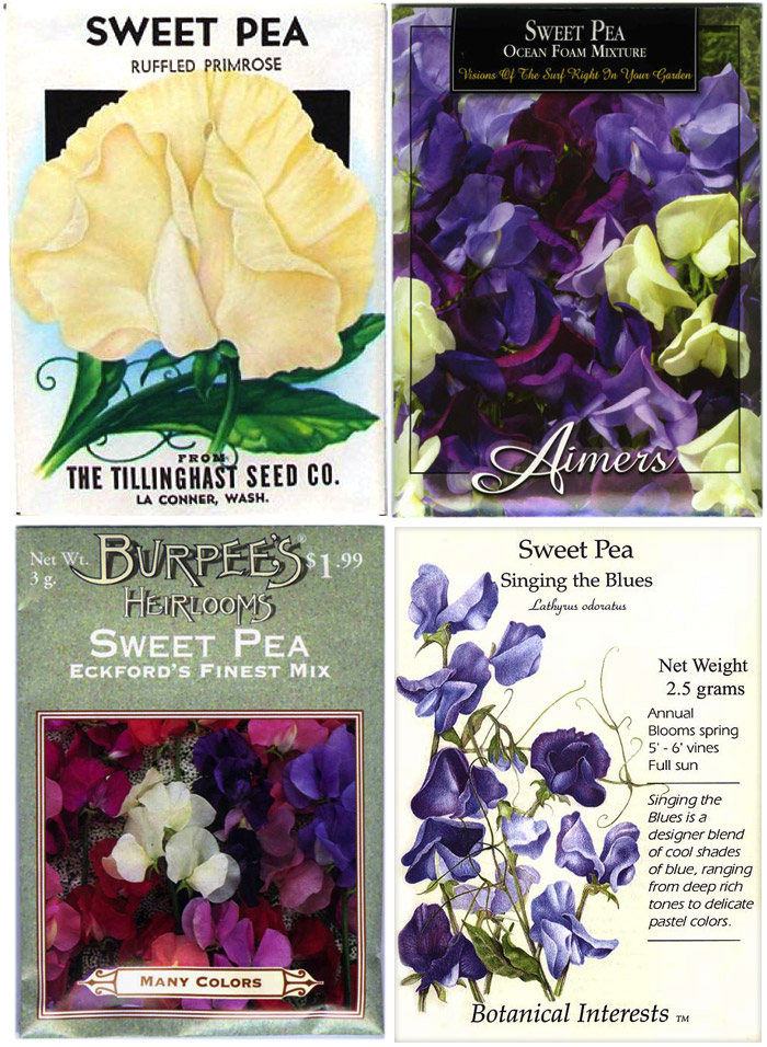 Sweet pea seeds from the 1940s (top left) and present
