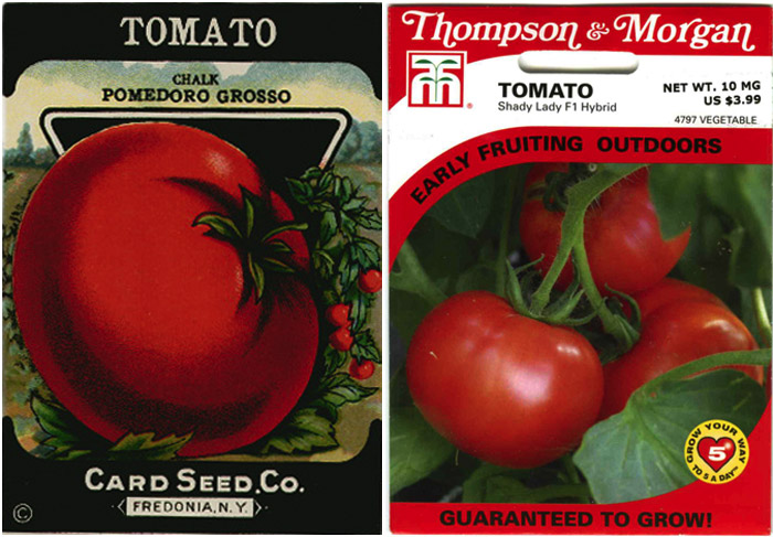 Rich illustration adorns this tomato seed package from the 1920s (left); Illustration is replaced by uninspired photography decades later (right)